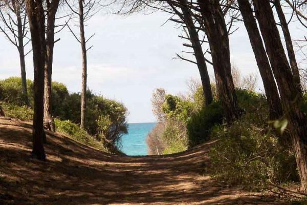 14-way-to-go-to-marina-di-bibbona-beach-vagott5980E26311-41C5-E65E-D8D3-4EF56F9FD7C8.jpg